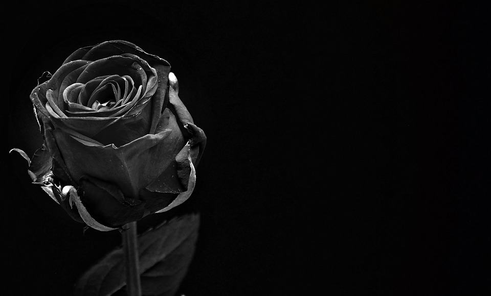 black-flower-rose-story-andhar