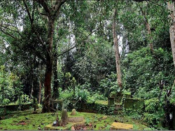 sacred-groves-chatur-kidmya